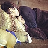 Khloe Kardashian shared a snap of her new boxer puppy, Bernard Hopkins, sleeping next to her sister Kim Kardashian in April. Khloe's husband Lamar bought Bernard for the couple in March 2013.  Source: Instagram user khloekardashian