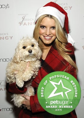 The Results Are in: Most Missed Celebrity Pet