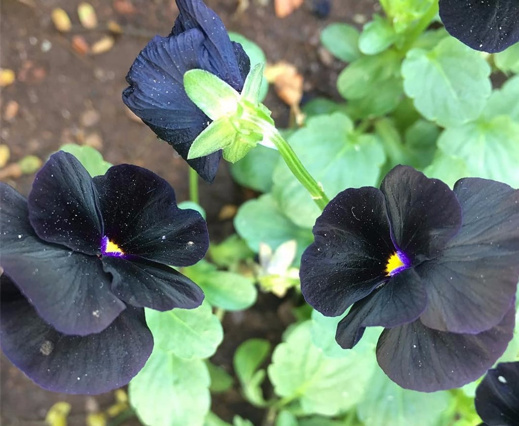 Black Flowers Popsugar Home Australia