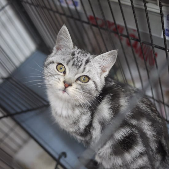 How to Choose a Shelter Cat