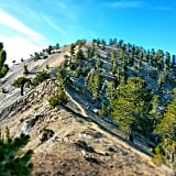 Photos of Trail in Wild Movie | Pacific Crest Trail