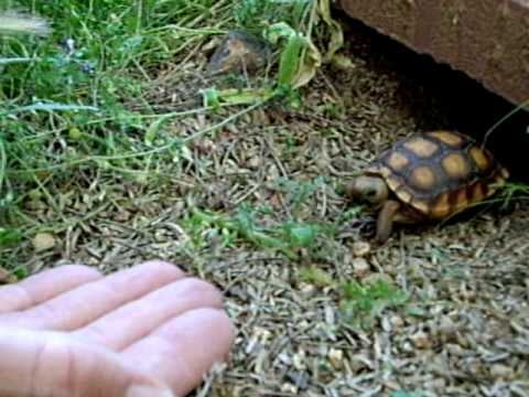 Sunday Funday Video: Taco the Tortoise
