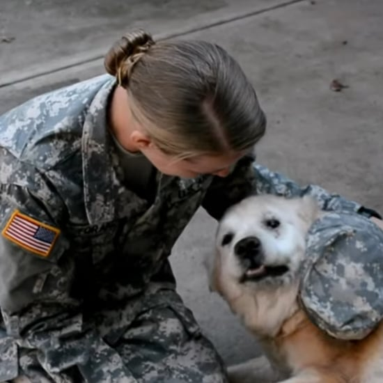 Dog Crying When Her Soldier Returns Home | Video