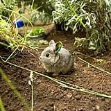Itty Bitty Bunny