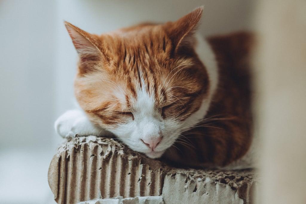 Boxes make the best nap places.