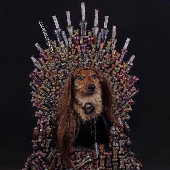 Game of Thrones Dogs