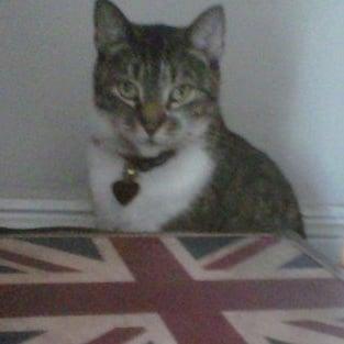 British Kitty