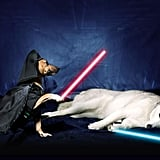 Dogs Dressed as Star Wars Characters