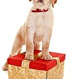 No Peeking at Presents!