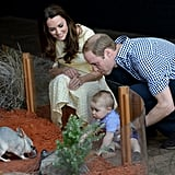 William, Kate, and George met the bilbies in Australia during their 2014 visit.