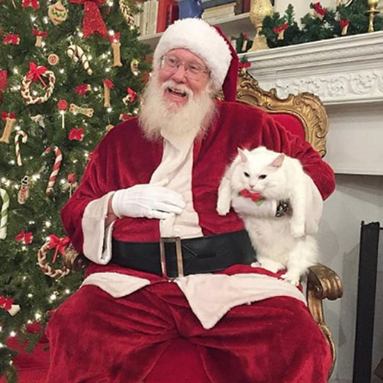 Funny Pictures of Cats Sitting on Santa's Lap