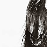 Nick Leary Wild Brumbies of Australia Portrait, From $1,500