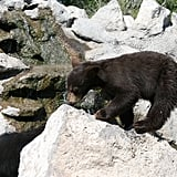 Idaho — Yellowstone Bear World