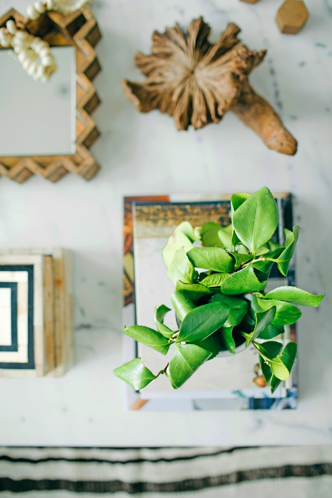 10 Houseplants That Will Actually Help You Sleep