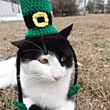 Cat in a Green Hat