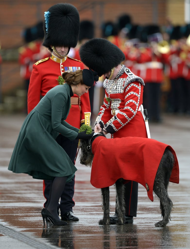 Kate Middleton pinned a shamrock on a dog.
