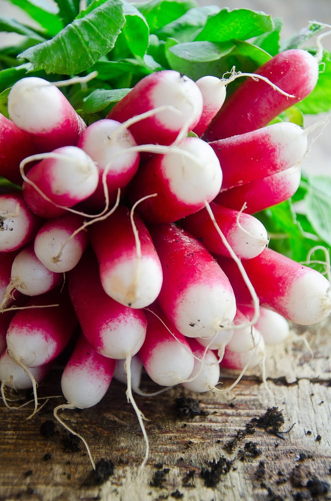 The Spring Food: Radishes