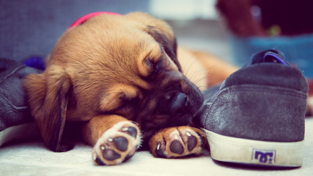 Your Puppy's Sleep Training Is Way Less Painful
