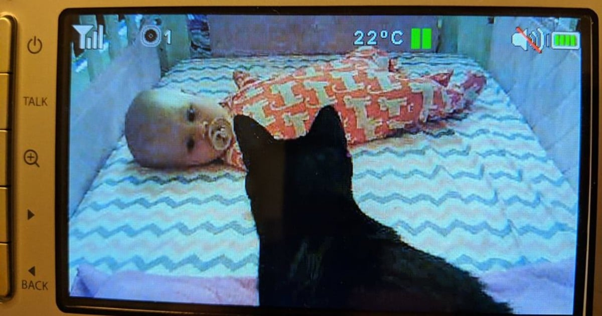 This Mum's Cats Became Best Friends Forever With Her Newborn Daughter and I'm Squealing