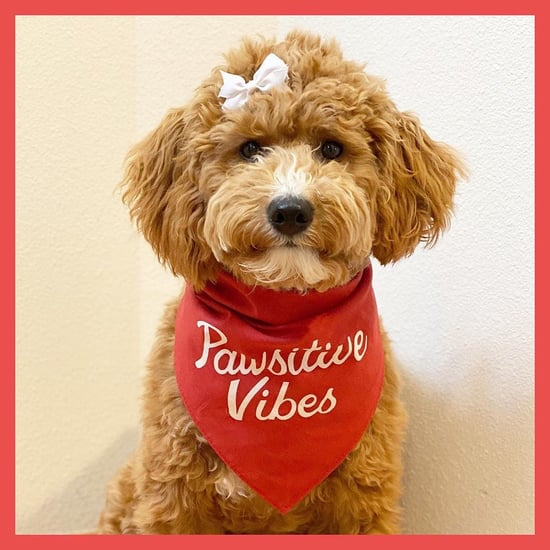 Best Summer Pet Clothes From Old Navy 2021