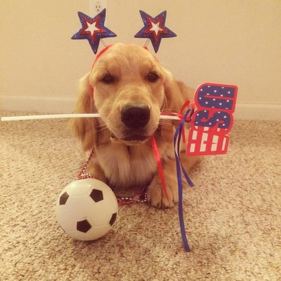 Instagram Dogs Represent World Cup