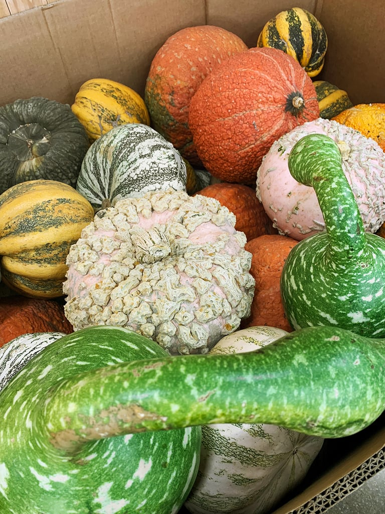 Assorted Pumpkins ($1-$6)