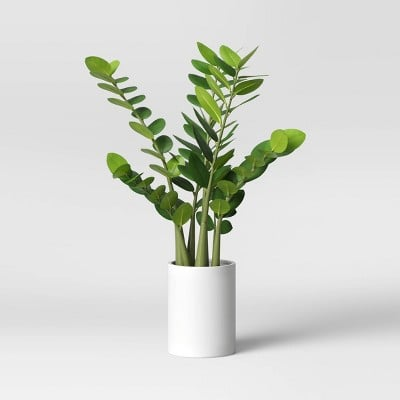 Project62 Artificial Zamioculcas Zamiifolia Plant in Pot