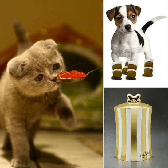 Pamper Your Four-Legged Highness This Holiday