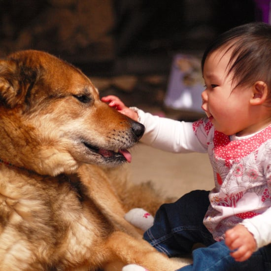 Women With Dogs Have Healthier Babies Study