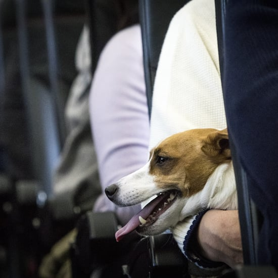 Can You Take Emotional Support Animals on Planes?