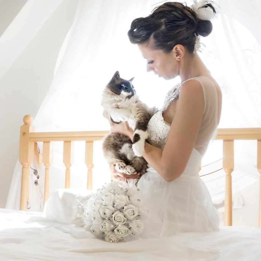 Wedding photos with cats popsugar love sex junglespirit Images