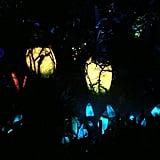 Pandora World of Avatar at Night
