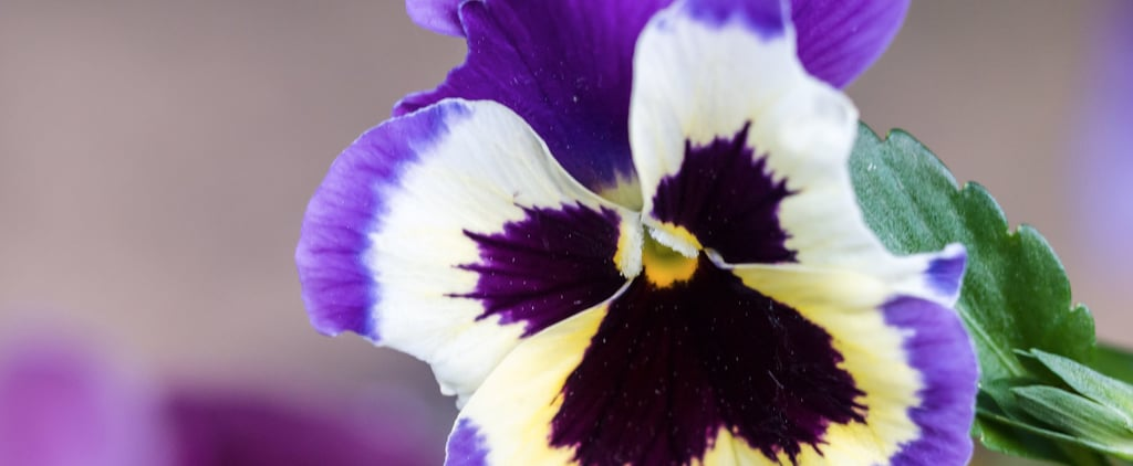 Do You Know These Poisonous Fall Bloomers?