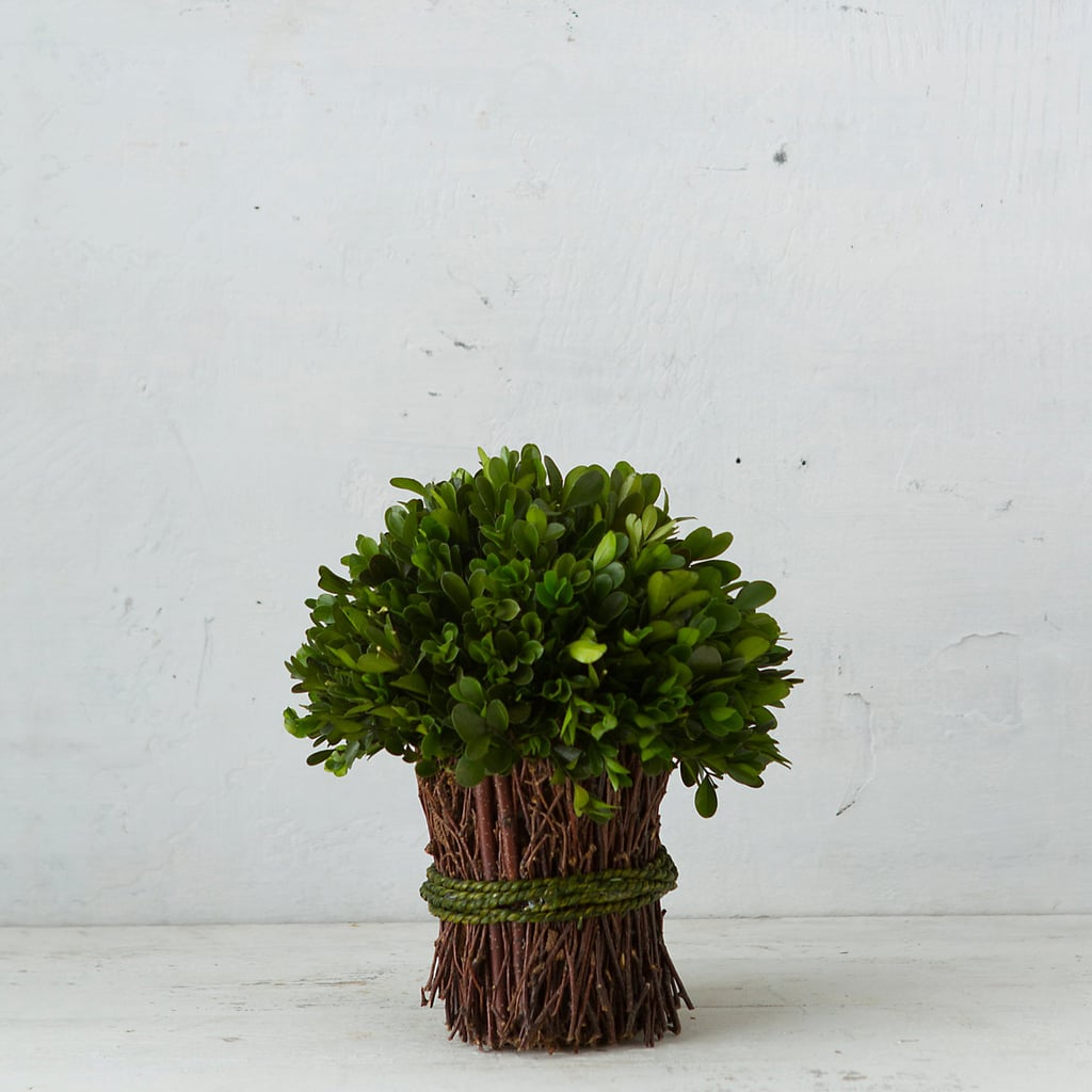 Terrain Preserved Boxwood Bouquet