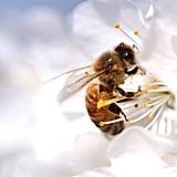 Les Masques au Venin D'abeille