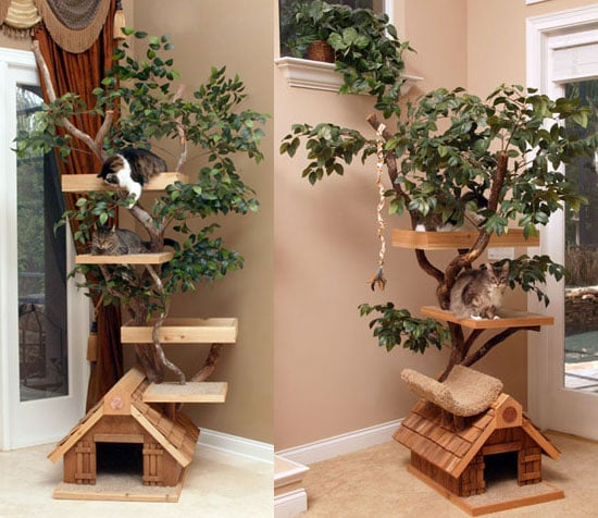 Cat Tree Houses: Spoiled Sweet or Spoiled Rotten?