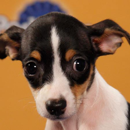 Puppy Bowl VIII 2012 Starting Lineup Pictures