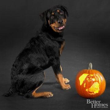 rottweiler downloadable dog breed pumpkin stencils. Black Bedroom Furniture Sets. Home Design Ideas