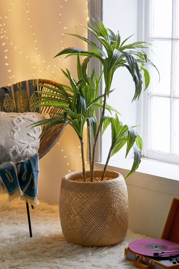 Dracena Potted Faux Tree