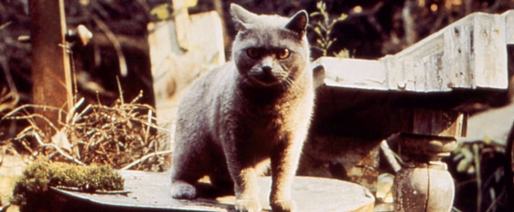 Pet Sematary Reboot Details