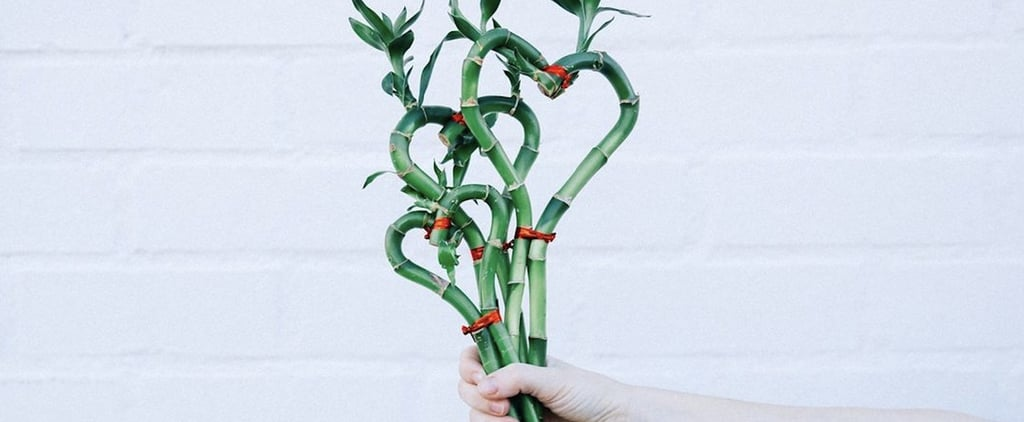 1-800-Flowers Heart-Shaped Bamboo For Valentine's Day