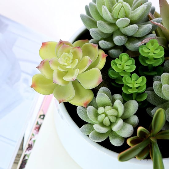 Faux Succulents on Amazon
