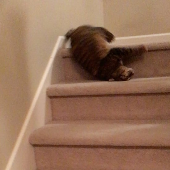 Videos of Cat Rolling and Tumbling Down Stairs
