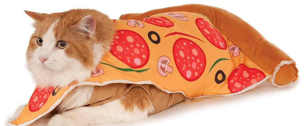 Best Cat Costumes For Halloween 2020