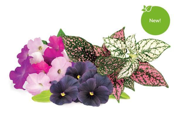Vibrant Flower 9-Pack of Plant Pods
