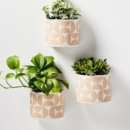 Best Hanging Plant Holders
