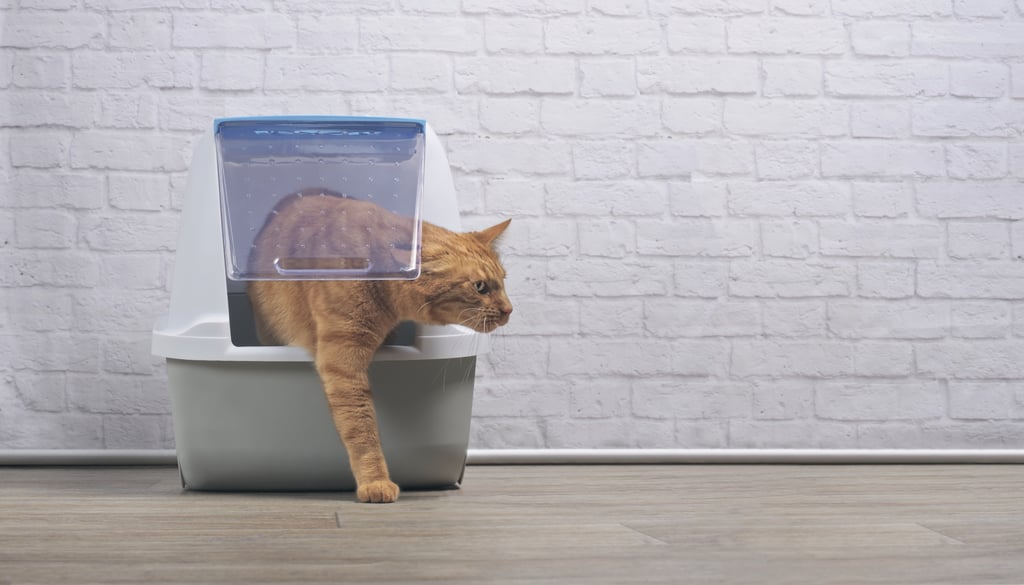 Use a Large Litter Box