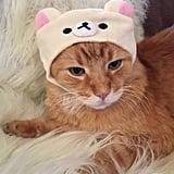 Rilakkuma Cat Cap ($10)