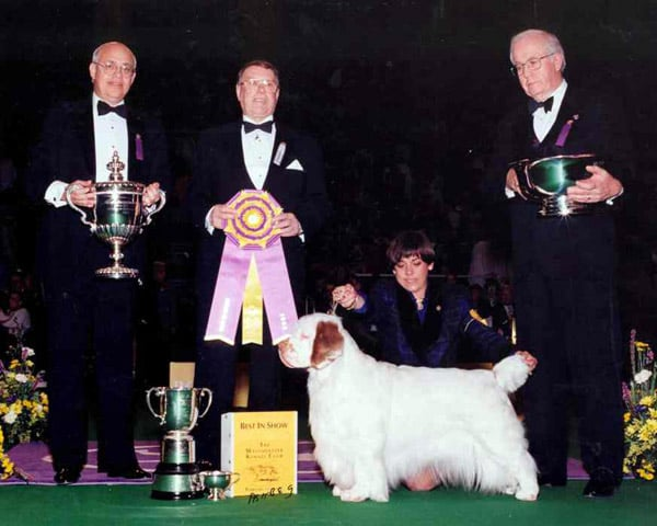 Clumber spaniel Ch Clussexx Country Sunrise won in 1996. Source: American Kennel Club Archives
