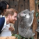 Prince Harry going in for a closer look